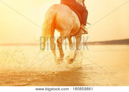 Horse feet. Hooves hit the water, raise splashes and splashes against the sunset. Summertime scene