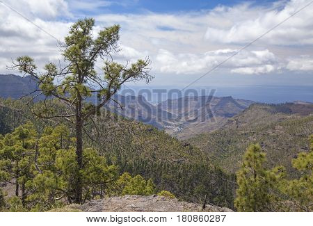 Central Gran Canaria protected area of Integral Nature Reserve Inagua pine forest view down valley of Mogan