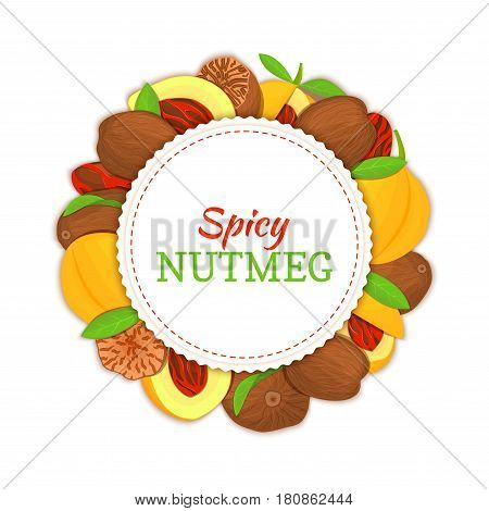 Round white frame composed of Nutmeg spice fruit. Vector card illustration. Nutmeg nuts frame, fruit in the shell, whole, shelled, leaves appetizing looking for packaging design of healthy food.