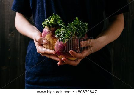 Organic Fresh Harvested Vegetables. Farmer's Hands Holding Fresh Swede, Closeup