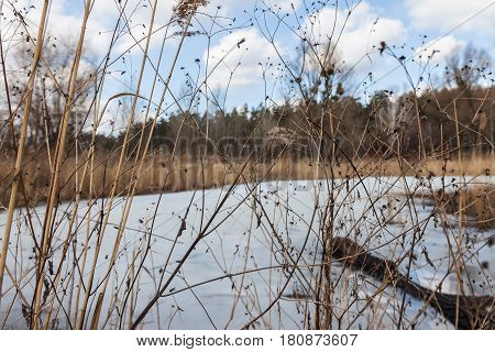 Through a dry yellow grass a snow-covered lake a forest and a cloudy clear sky.