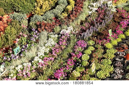Colorful plants and flowers in flowerpots sales exhibition