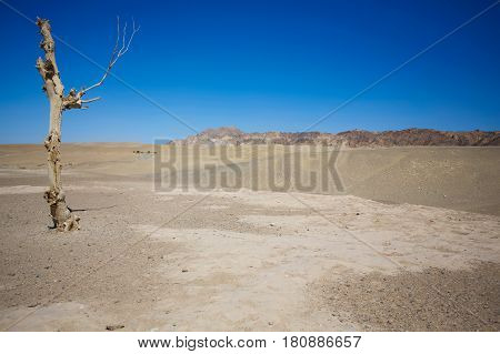 Dead wood in the wilderness desert with clear blue sky Scenery in Tibet .