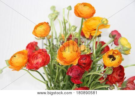 Bouquet with red and orange flowers against white