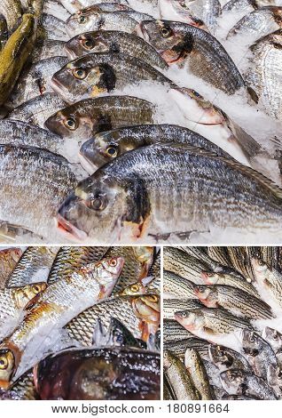 Collage of various fishes stored on ice at the fish market
