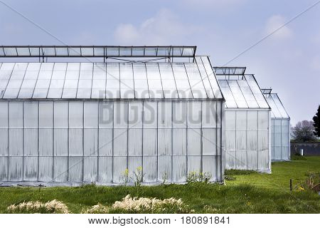Whitened greenhouse in Westland in the Netherlands