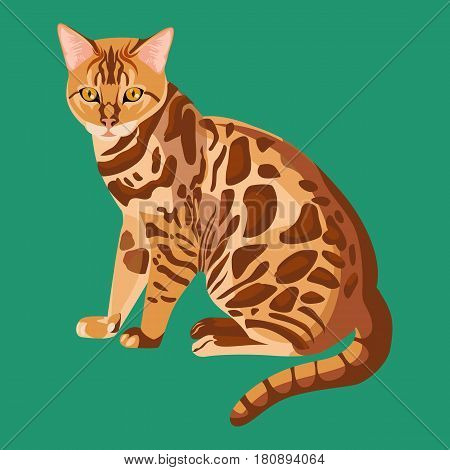 Bengal cat isolated on white background. Cute selective breeding of domestic cats. Confident, healthy and friendly cat with highly contrasted and vividly marked leopard coat vector illustration