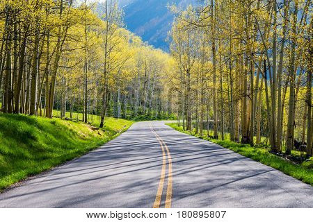 Road through aspen forest in Colorado