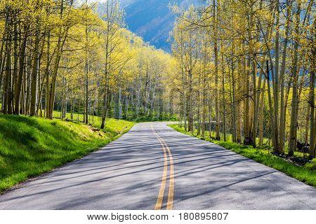 Road through aspen forest in Colorado