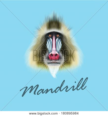 Vector Illustrated portrait of Mandrill monkey. Cute fluffy face of primate on blue background.