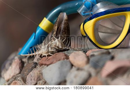 treasure and souvenir. thorn and cone conchs marine shells or seashells sea snails on grey and red stones rocky surface on blurred blue and yellow diving mask background. Idyllic summer vacation