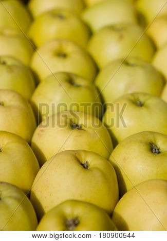 Lines of green apples in a row