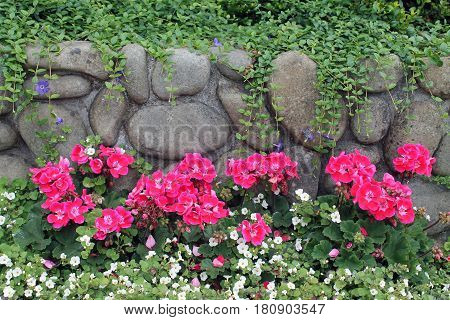 Vines Growing Over a Rock Wall behind a Flower Garden