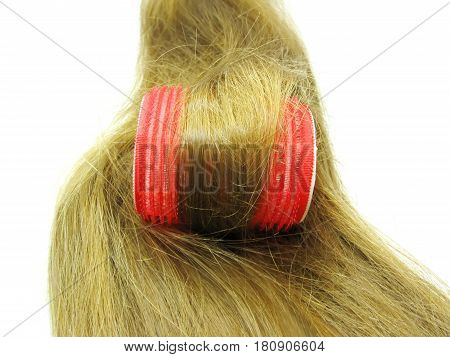 red roller in hair wave isolated on white background