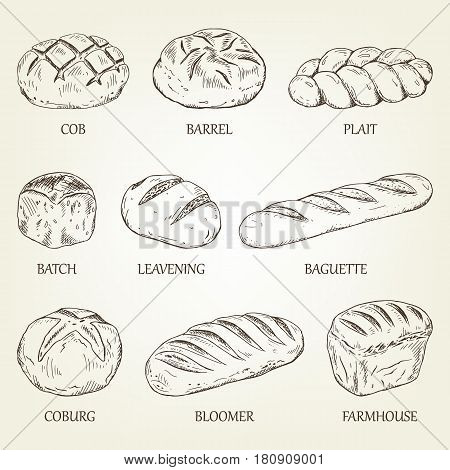 Outline set of different kinds of bread. Vector illustration with realistic pastry icons. Breads collection designed for advertising bakery, restaurant menu, logo or recipe book design.