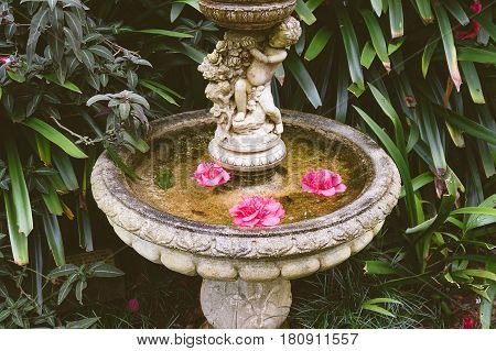 Old Fountain With Large Pink Flowers