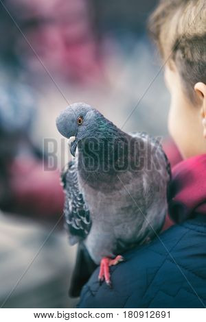 Small cute boy outside, feeding pigeons
