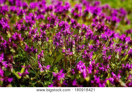 Nature Colorful Natural Blurred Background. Bokeh, Boke Wild Flowers With Sunlight Colors Absract Background