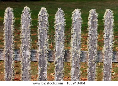 Picket Fence Covered in Moss and Lichen