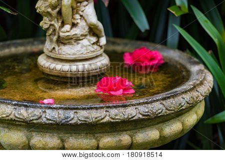 Two Bright Colorful Rose Flowers Floating In Water