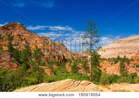 Famous Zion National Park. It is a southwest Utah nature preserve distinguished by Zion Canyons steep red cliffs