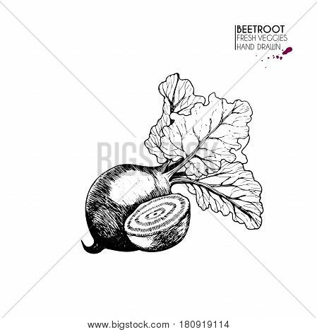 Vector hand drawn set of vegetables. Isolated beetroot. Farm harvest. Engraved art. Delicious vegetarian objects. Use for restaurant menu market store party decoration