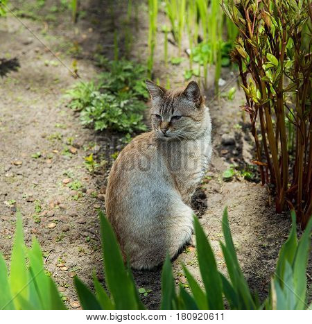 homeless cat in the flowerbed on a Sunny day