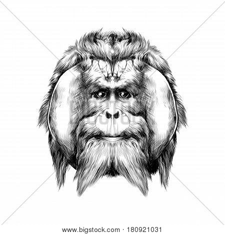 head hairy orangutan symmetry graphics sketch vector black and white drawing poster