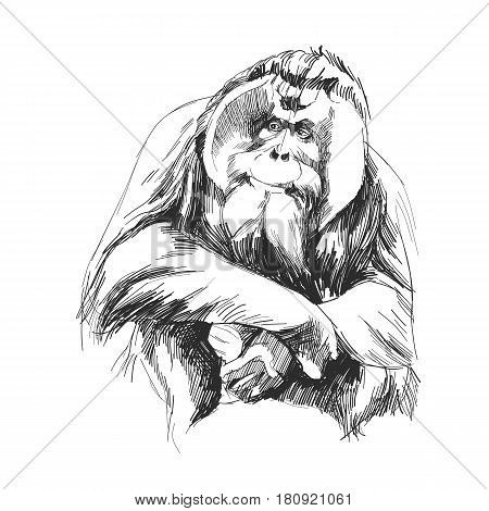 hairy orangutan in full growth sits on his haunches graphics sketch vector quick drawing