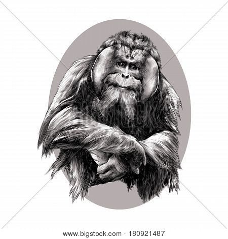 hairy orangutan in full growth sits on his haunches graphics sketch vector black and white pattern on a brown background beige oval circle