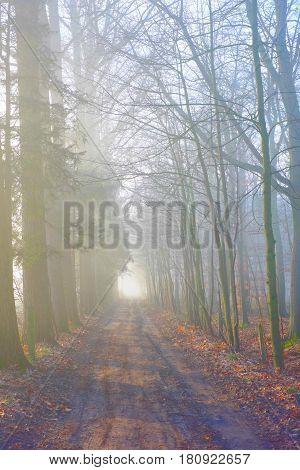 Misty hiking trails through the woods early in the morning showing a misty sunrise