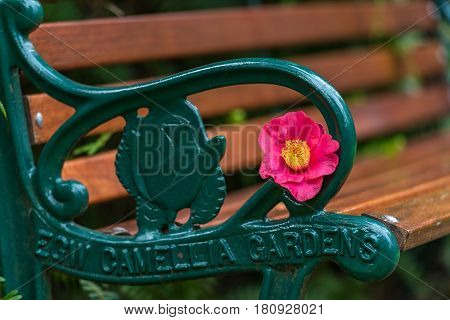 Bench With Bright Pink And Yellow Camellia Flower