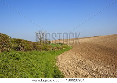 Chalky Plowed Soil And Hedgerow