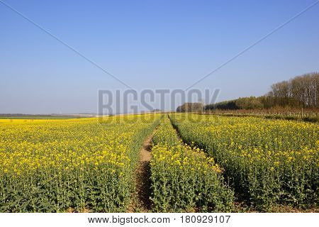 Springtime Agriculture