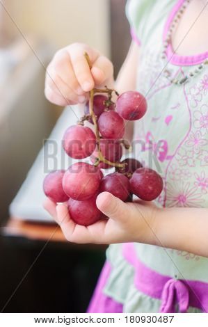 Bunch Of Grapes Holding By Child Hands.