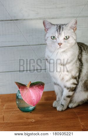Nice Aroma Concept - Cat Sitting Behind The Nice Scent Flower.