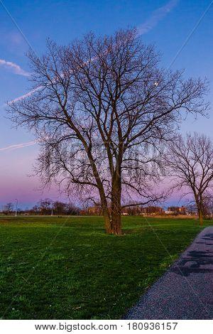 tree in Calvert Vaux Park Brooklyn, NY