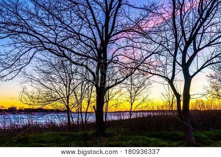 Sunset through a tree in Calvert Vaux Park Brooklyn NY