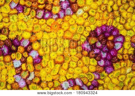 background of yellow and purple flowers, Asteraceae