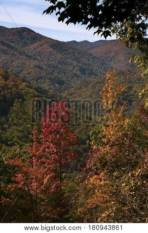 An overlook of the beautiful colorful trees in autumn along the Cherohala Highway in western North Carolina