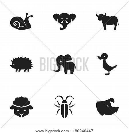 Set Of 9 Editable Zoo Icons. Includes Symbols Such As Elephant, Quack, Porcupine And More. Can Be Used For Web, Mobile, UI And Infographic Design.