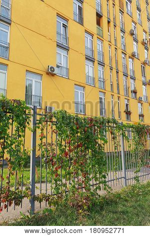 Facade of a modern multi-storey house and a fence with ivy. Architecture