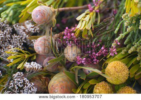 Background of various wildflowers shot close-up (macro).