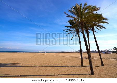 Valencia La Malvarrosa beach arenas palm trees in Spain