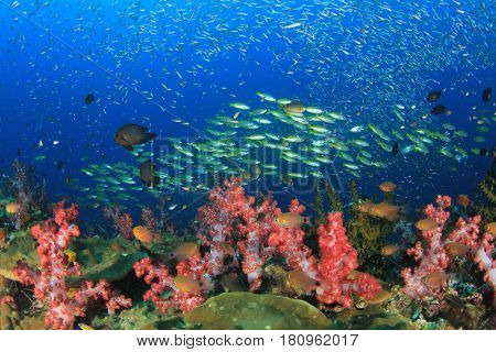 Coral reef underwater and tropical fish