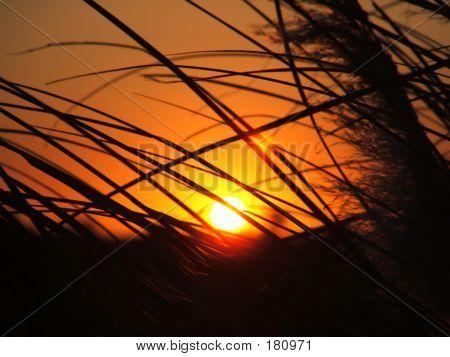 Sun Through Tall Grass
