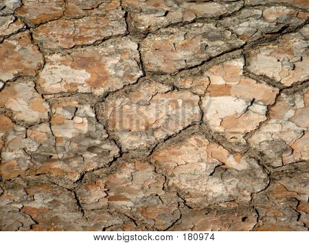 Tree Bark Cracked Earth