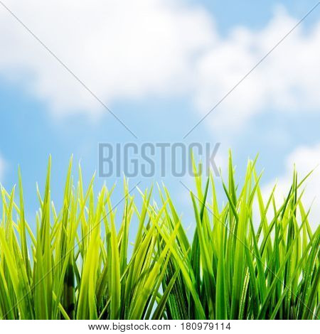 Fresh green grass over blue sky background, Easter holiday background, beautiful natural spring and summer border, sunny day