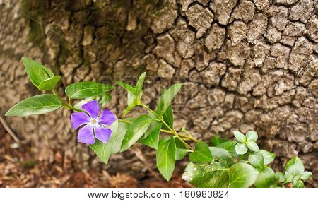 One purple flower on a long stem of green leaves against a brown textured background
