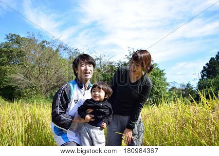 rice harvest with young family in the nature